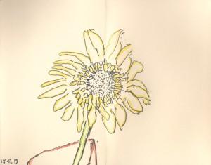 gerber daisy 19.12.13